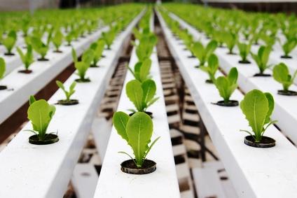 Hydroponic Gardening hydroponicgardeningonlinecom